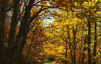 Redescubre el otoño en la Sierra de Gredos