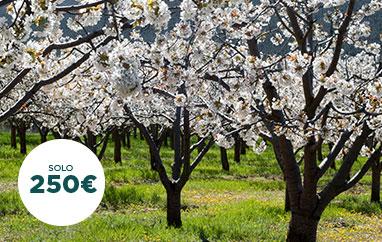 Promoción cerezo en flor Jerte - Hotel Mirador de Gredos